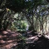 07 Bajo el Bosque