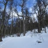 07 Entre el Bosque de Lengas