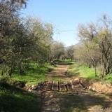 04 Puente & Estero