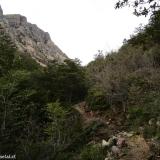 05 Sendero entre el Bosque