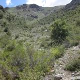 02 Olivillos en la Quebrada