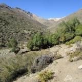 08 Quebrada NO Co. Del Diablo 2.982msnm