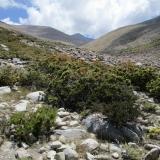 15 Pico 4.338msnm