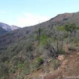 06 Olivillos en la ladera O
