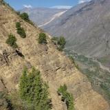 20 Cipres de la Cordillera Aferrado a las Laderas Rocosas