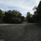 05 Sendero de Animales en la Margen O del Estero El Manzano