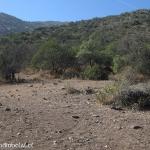 05 Huellas entre Arbustos