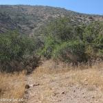 07 Sendero entre Arbustos