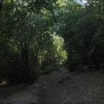 02 Bajo el Bosque