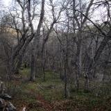 03 Bosque de Robles