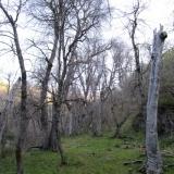 06 Bosque de Robles