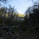 07 Bosque de Robles