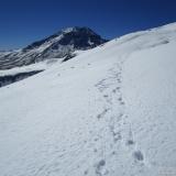 14 Huellas en la Nieve