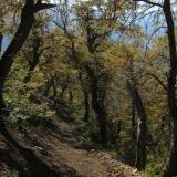 04 Huella en el Bosque