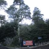 01 Entrada Sector Sollipulli Parque Nacional Villarrica
