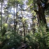28 Sendero en el Bosque