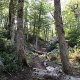 06 Sendero en el Bosque
