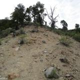 03 Cipreses de la Cordillera