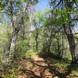04 Bosque de Robles