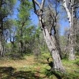 05 Bosque de Robles
