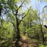 26 Bosque de Robles
