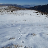 26 Huellas en la Nieve