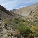 06 Huella de Animales en la Quebrada Paiguano