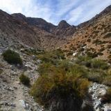 07 Huella de Animales en la Quebrada Paiguano