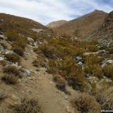 10 Sendero Animal en la Quebrada Paiguano