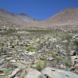 18 Tramo Superior Quebrada El Bosque