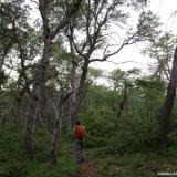 06 En el Bosque