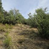 09 Ascendiendo entre los Arbustos