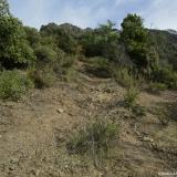 10 Ascendiendo entre los Arbustos