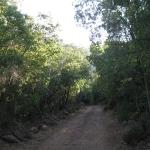 01 Bajo el Bosque
