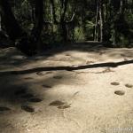 24 Piedras Tacitas