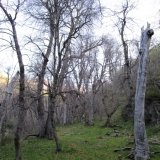 06 Bosque de Robles