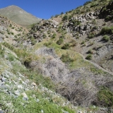 07 Huella de Caprinos por la Quebrada