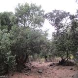 13 Corrales y Casa de Arrieros a la Entrada del Cajon de los Cipreses