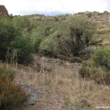 16 Vegetacion en la Quebrada