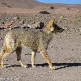 Fauna 039