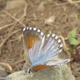 Fauna 045