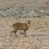 Fauna 059