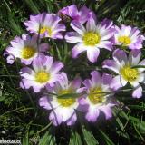 Flora 003