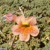 Flora 012