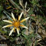 Flora 020