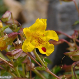 Flora 021