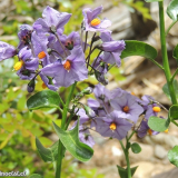 Flora 038