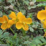 Flora 039