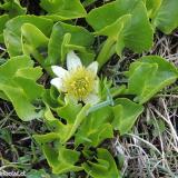 Flora 041