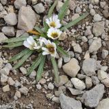 Flora 042